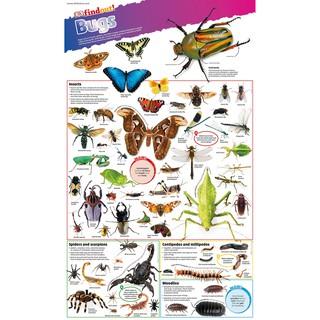 Sách DKfindout Bugs Poster - Dành cho trẻ từ 5 tuổi thumbnail