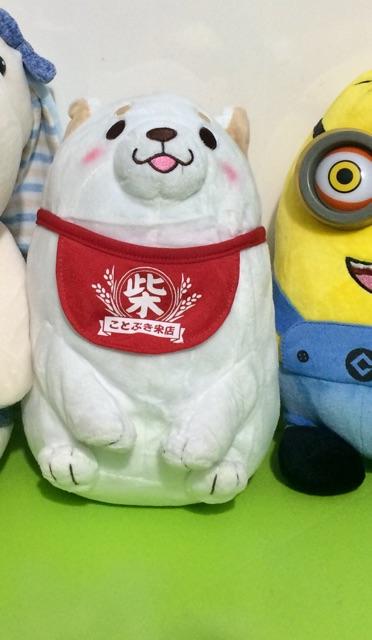 Chó bông Shiba Inu