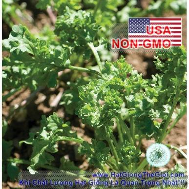 200h Hạt Giống Xà Lách Xoong - Wrinkle Nhăn Nhúm (Lepidium sativum)