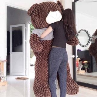 Gấu teddy cỡ đại size m8