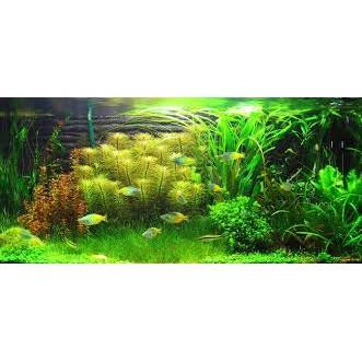 Giảm GIá 50% Bể Cá Mini kiêm Đồng Hồ Để Bàn Màu Ngẫu Nhiên + Tặng kèm đá và cây cảnh trang trí SIÊU HOT