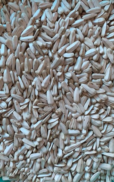 [Mã 267FMCGSALE giảm 8% đơn 500K] Hướng dương trắng hạt to Kenya gói 500g và 1kg dành cho chim,Vẹt