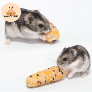 [Mã PETMS08 hoàn 8% đơn 199K] Bắp Ngô sấy khô nguyên quả ăn dặm kiêm mài răng cho Hamster, Thỏ, Bọ, Sóc, Chó... thumbnail