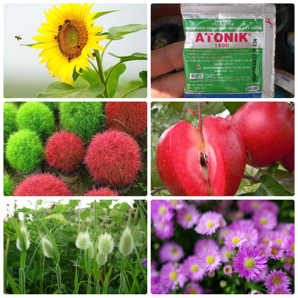 Combo hạt giống hoa đẹp