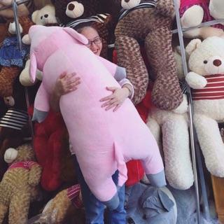 – lợn bông 1m5