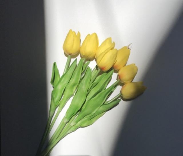 Hoa Tuylip màu sắc cánh mềm, chụp ảnh cực xinh luôn ạ