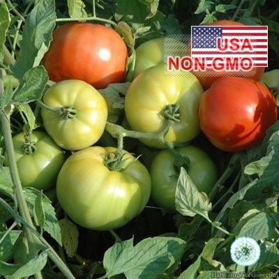 5h Hạt Giống Cà Chua - Gió Núi (Solanum lycopersicum)