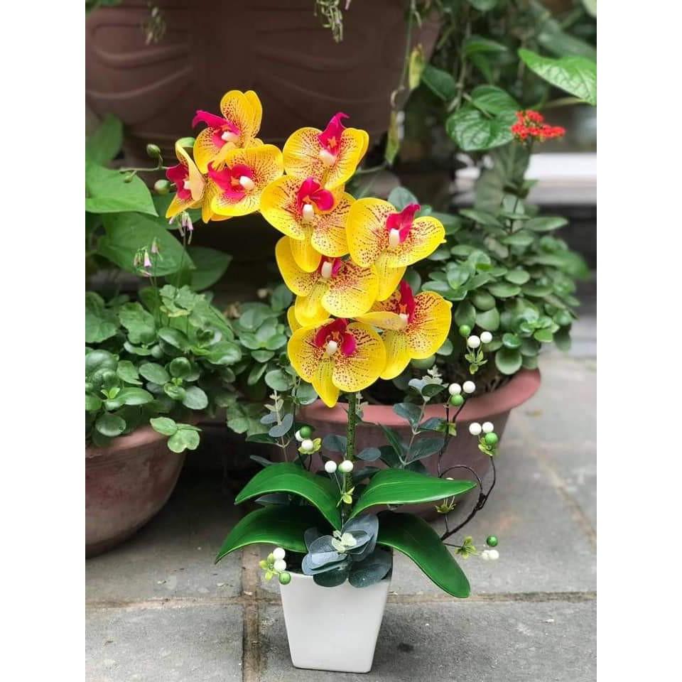 Chậu Hoa Lan Chất Cao Su Cao Cấp ( sản phẩm gồm cả chậu và hoa)