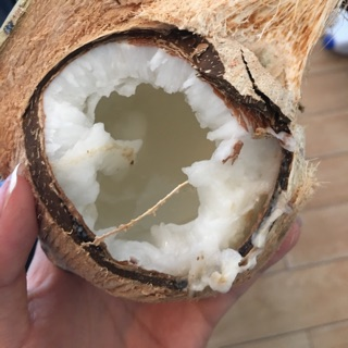 Dừa của con Linhnguu