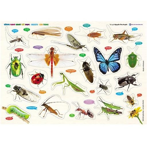 Đồ chơi - Bảng Gỗ núm nhựa Cùng Con Chơi và Học - Côn Trùng - Insects - 3129233 , 1231726068 , 322_1231726068 , 115000 , Do-choi-Bang-Go-num-nhua-Cung-Con-Choi-va-Hoc-Con-Trung-Insects-322_1231726068 , shopee.vn , Đồ chơi - Bảng Gỗ núm nhựa Cùng Con Chơi và Học - Côn Trùng - Insects