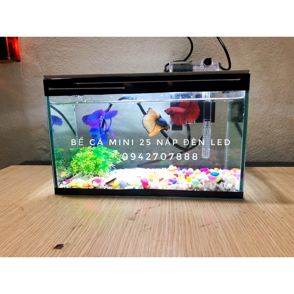 🐠 Set bể cá mini có lọc và nắp đèn led và 7 món( bể, lọc, cây, sỏi màu, vỏ  sò biển, nắp đèn led, thức ăn cá)