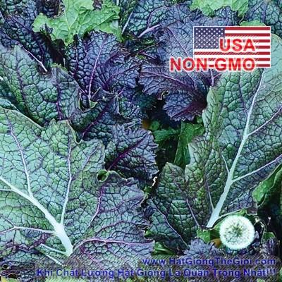 50h Hạt Giống Cải Mù Tạt - Lưỡi Rồng (Brassica juncea)