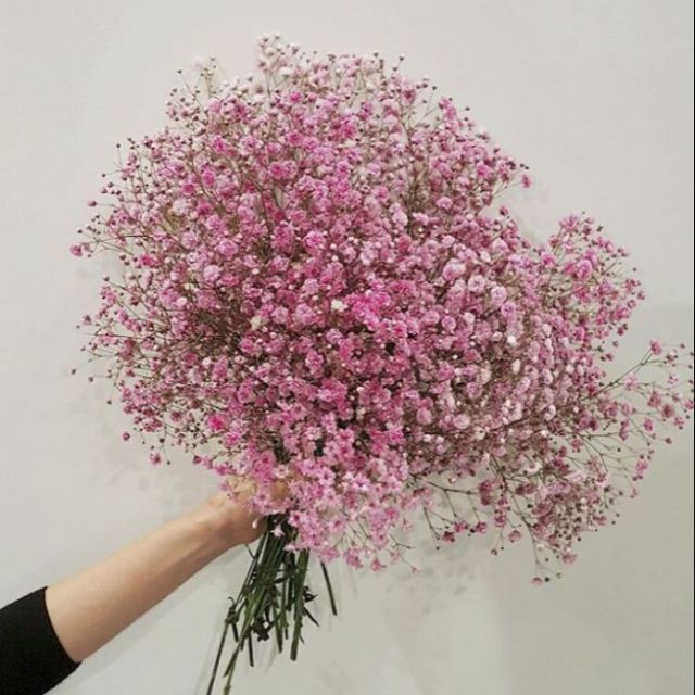 Hoa baby khô hồng phấn | Shopee Việt Nam