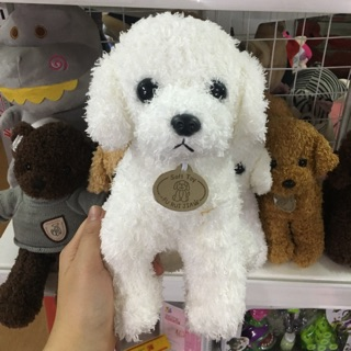 Chó Poodle lông xù 25cm