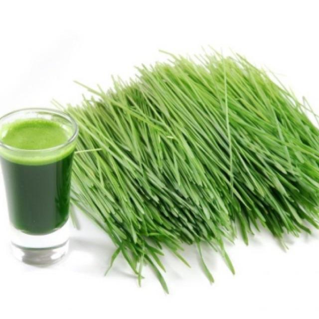 Hạt giống mầm lúa mạch ( Barley Grass) 100g - 2490741 , 946442601 , 322_946442601 , 40000 , Hat-giong-mam-lua-mach-Barley-Grass-100g-322_946442601 , shopee.vn , Hạt giống mầm lúa mạch ( Barley Grass) 100g