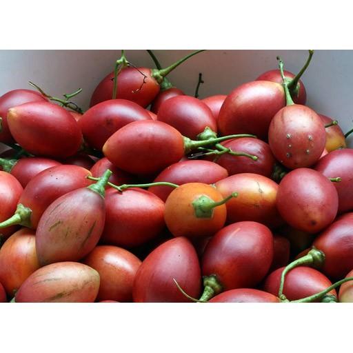 FREE SHIP BỘ 10 gói hạt giống cà chua thân gỗ Tặng 2 phân bón