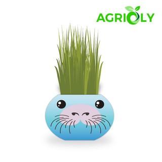 Chậu cây trồng Agrioly Grass Kit – hình SƯ TỬ BIỂN và hạt giống tiêu chuẩn của Úc.