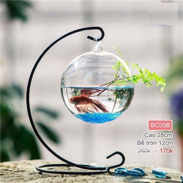 Bể cá mini siêu rẻ.