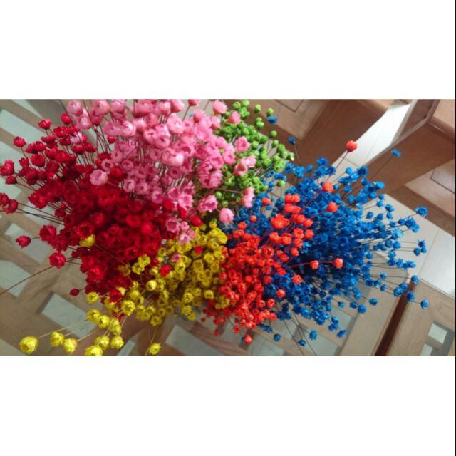 Combo110 Hoa tuyết nhiệt đới 1k/ 1 hoa khô