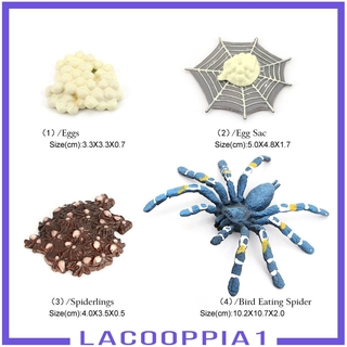 [LACOOPPIA1] Lot of 4 Nature Bird Eating Spider Growth Cycle Child Learning Teaching Toys