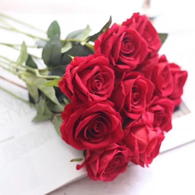 Combo 10 bông hoa hồng nhung đẹp xuất sắc (chat để chọn màu)