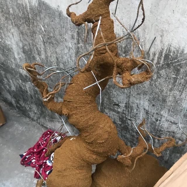 Gốc rồng bonsai 30cm