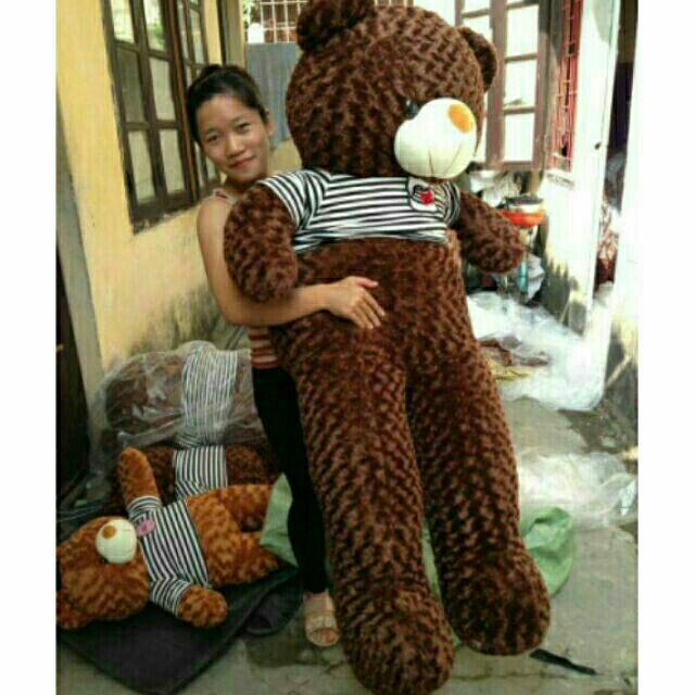 Gấu bông teddy đáng yêu 1m6 khổ vải 1m8