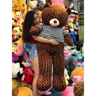 Gấu bông teddy khổ vải 1m6