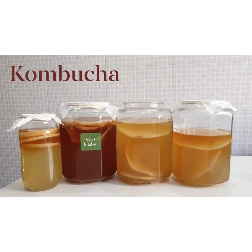 Scoby/Kombucha