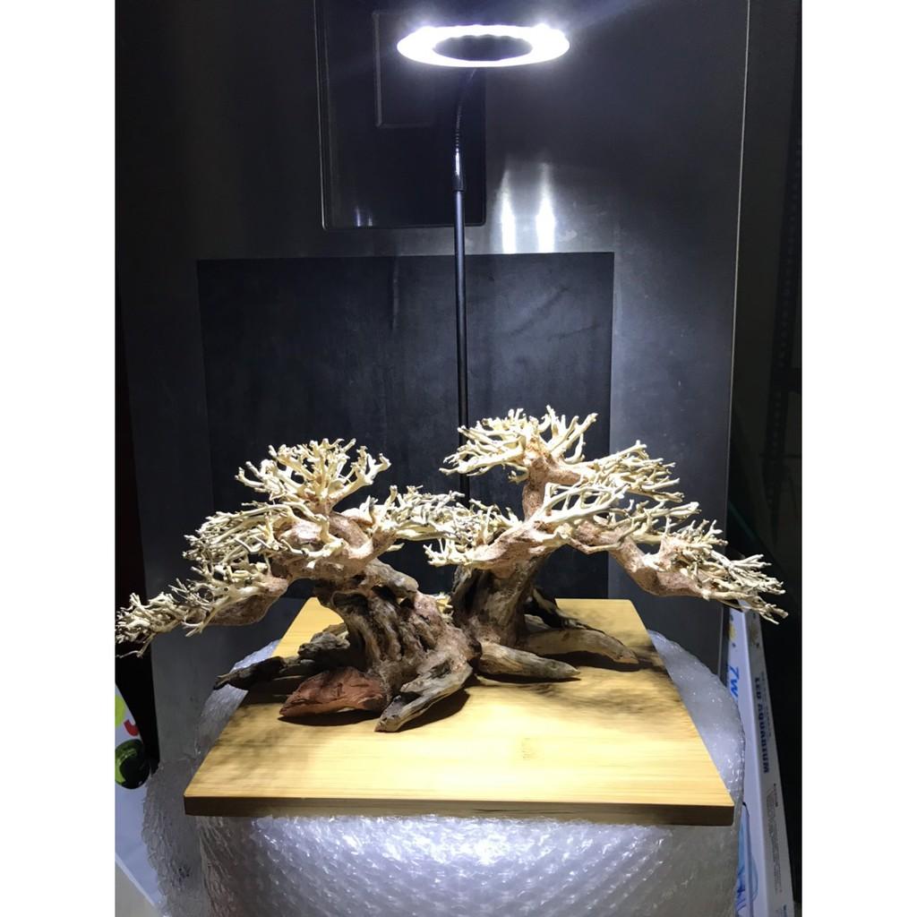 Lũa Bonsai Trang Trí Bể Thủy Sinh - Bể Cá Cảnh 20x15cm và 40x30cm