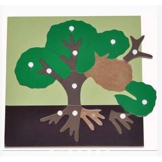 Giáo cụ Montessori – Bộ ghép sinh học bằng gỗ