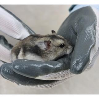 Găng tay bắt hamster thumbnail