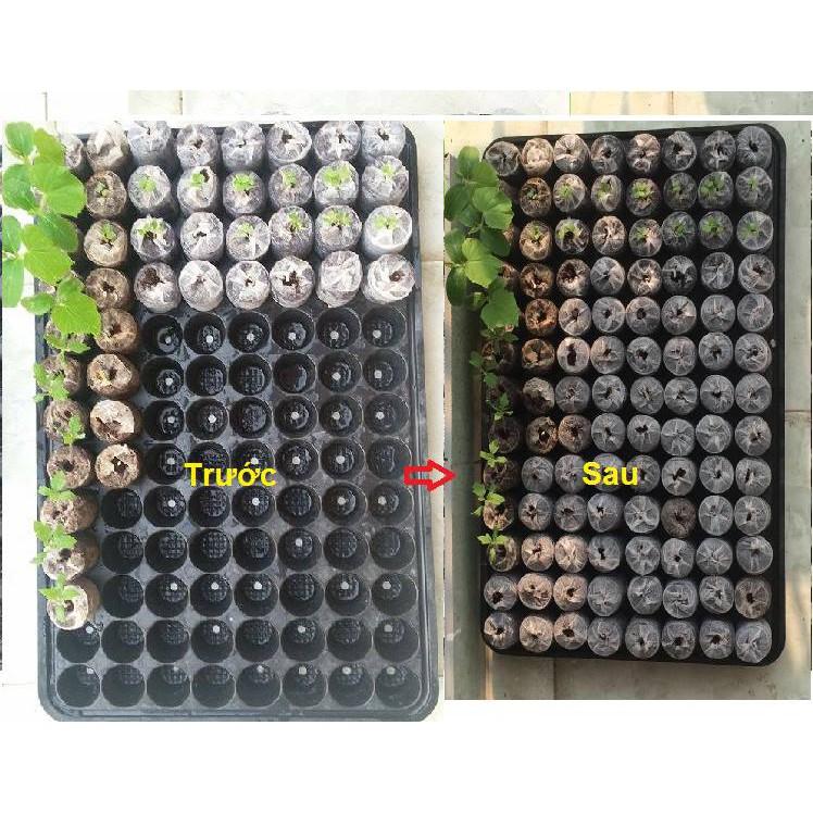 COMBO Hạt giống bán sỉ hạt giống bán buôn meoxinh26 - 2586612 , 367479990 , 322_367479990 , 1770000 , COMBO-Hat-giong-ban-si-hat-giong-ban-buon-meoxinh26-322_367479990 , shopee.vn , COMBO Hạt giống bán sỉ hạt giống bán buôn meoxinh26