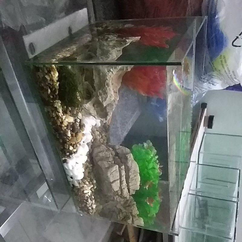 bể cá mini 30*20*20