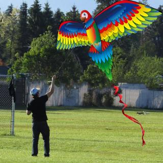 3D Parrot Kite Single Line Flying Kites with Tail and Handle for Adult and Kid