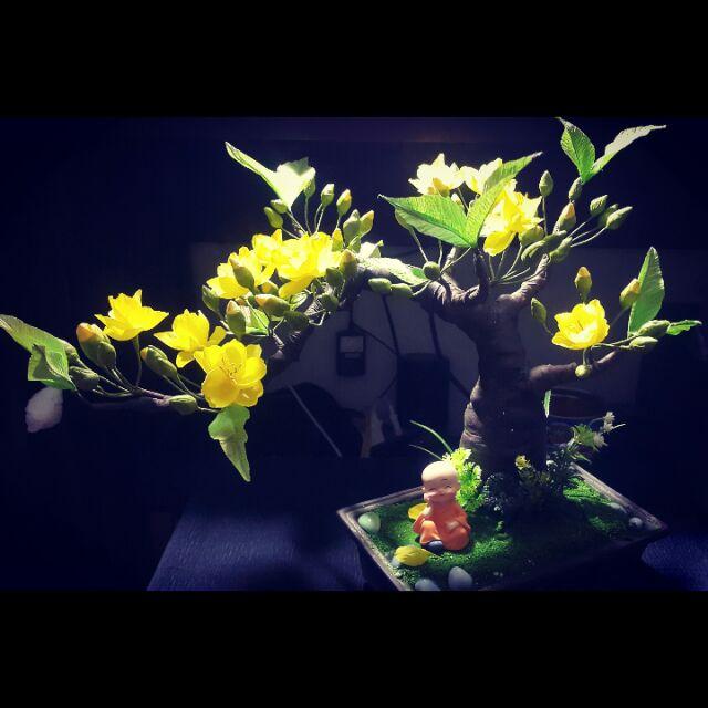 Set hoa mai của bạn Thủy Kẹo