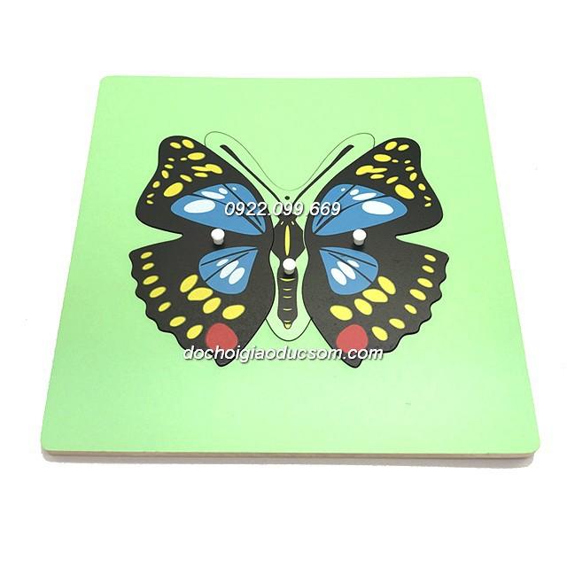 Bảng ghép hình Montessori Puzzle - Sinh học - Hình con bướm - 2587361 , 458663888 , 322_458663888 , 110000 , Bang-ghep-hinh-Montessori-Puzzle-Sinh-hoc-Hinh-con-buom-322_458663888 , shopee.vn , Bảng ghép hình Montessori Puzzle - Sinh học - Hình con bướm