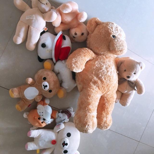 combo gấu của thiên thanh